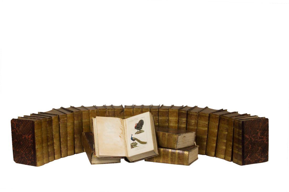 Dizionario delle scienze naturali prima traduzione for Planimetrie aggiunte casa